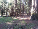 Four Tahoma Lots – Commercial, Multi-Family, Residential – in the Commercial Core
